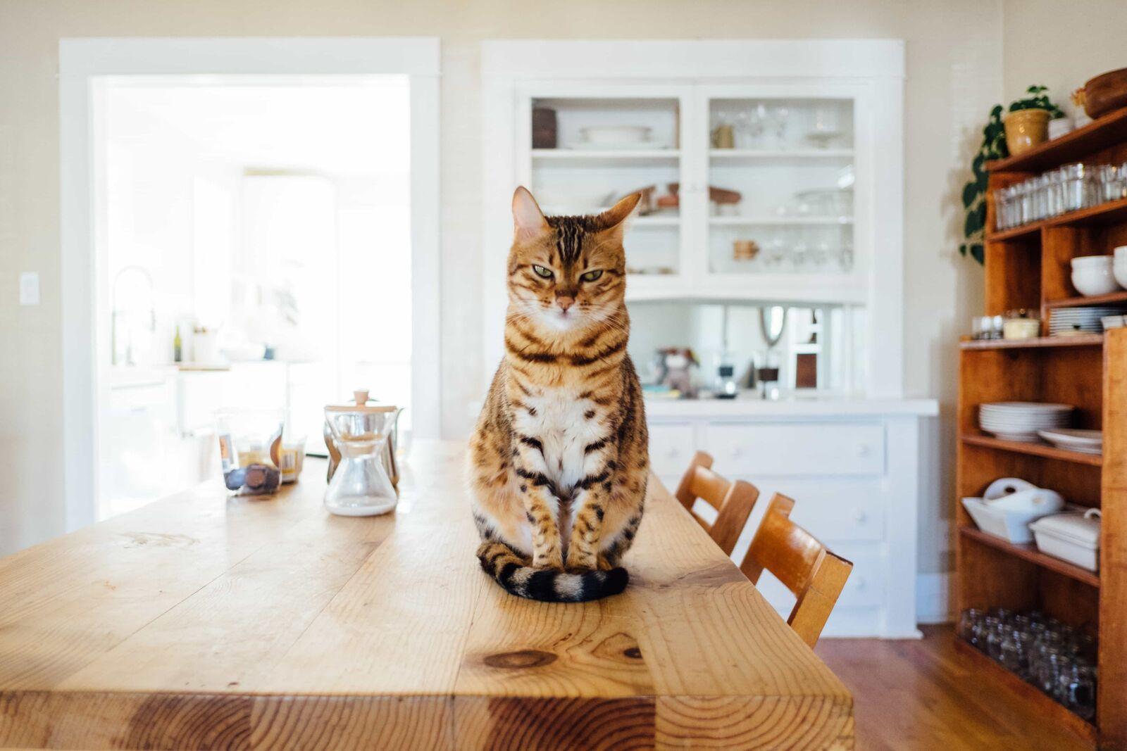 Un chat est assis sur la table dans une cuisine lumineuse, avec un grand buffet blanc et une étagère en bois
