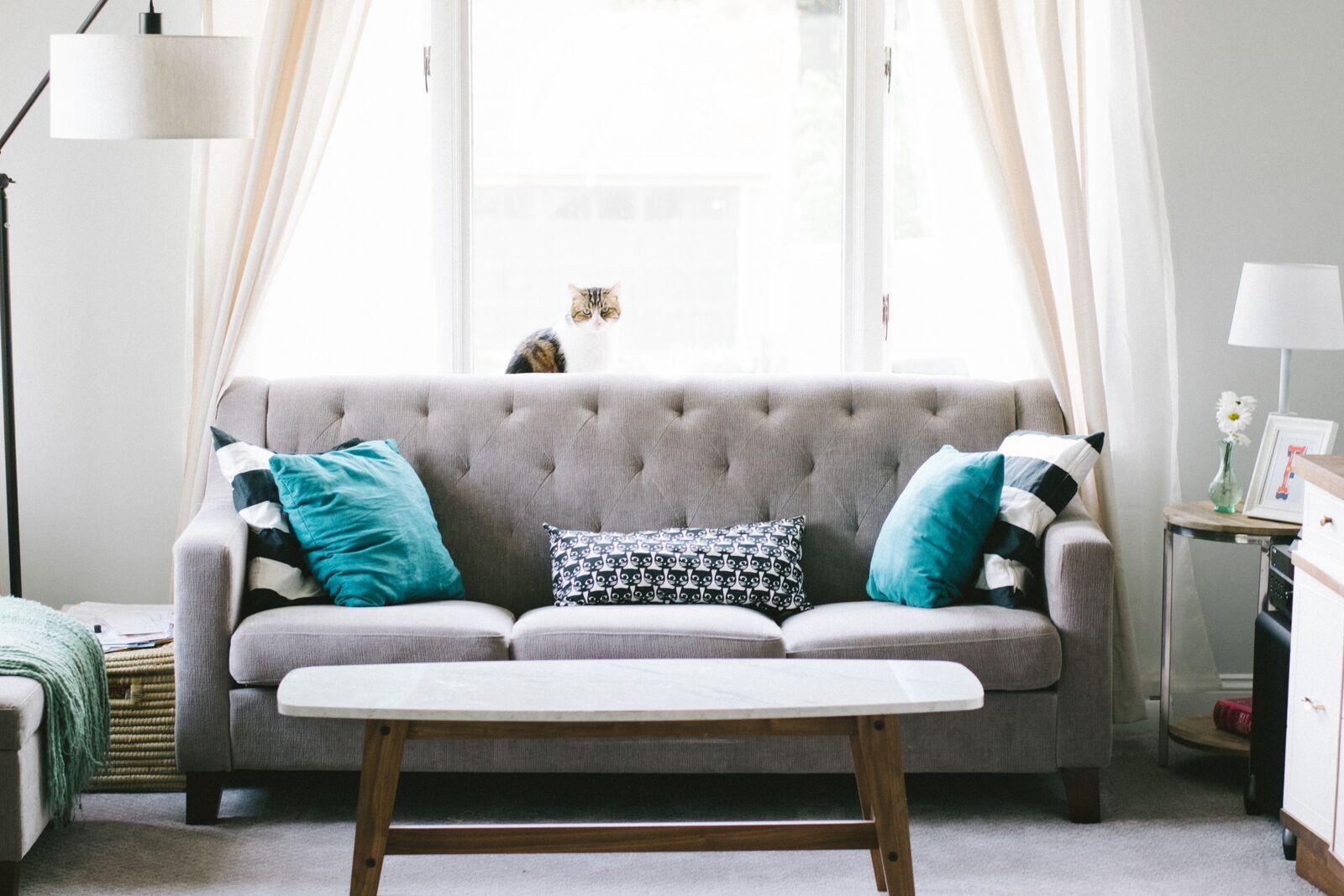Un salon lumineux avec au centre un canapé gris et un chat