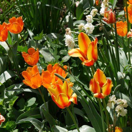Vive le printemps : 6 idées pour embellir son quotidien