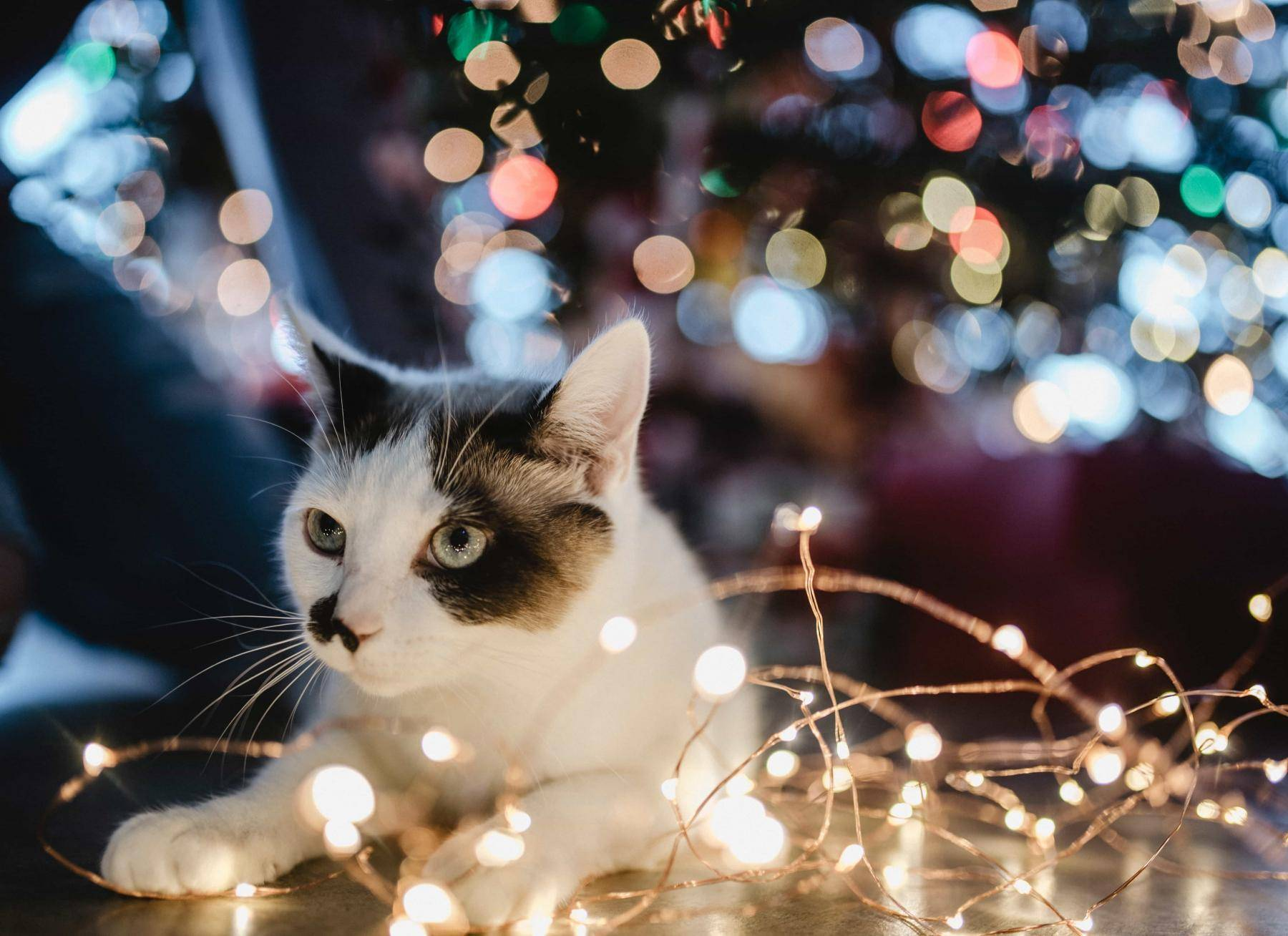 Des idées pour décorer sa maison en attendant Noël !
