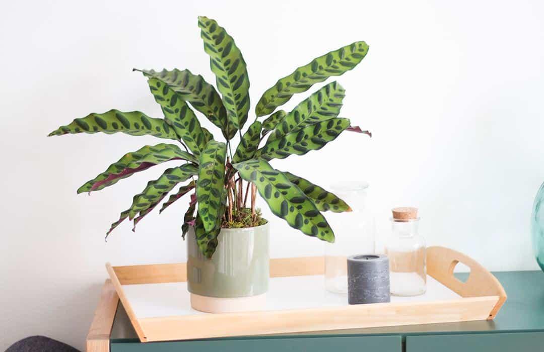 carte cadeau plante