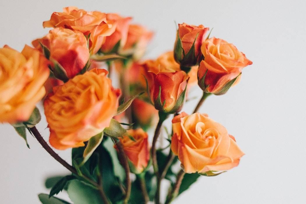 bouquet de fleurs oranges